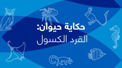 Photo of حكاية حيوان – الحلقة السابعة – القرد الكسول