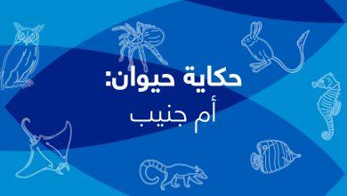 Photo of حكاية حيوان- الحلقة الثامنة- أم جنيب