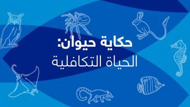 Photo of حكاية حيوان- الحلقة التاسعة- الحياة التكافلية