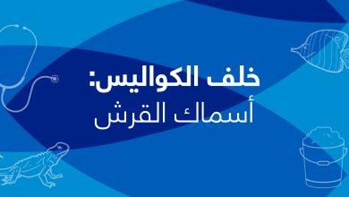 Photo of خلف الكواليس- الحلقة الثالثة- أسماك القرش
