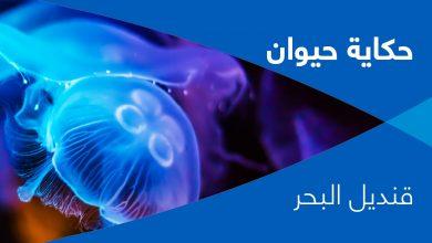 Photo of حكاية حيوان- الحلقة العاشرة- قنديل البحر