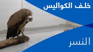 Photo of خلف الكواليس- النسر