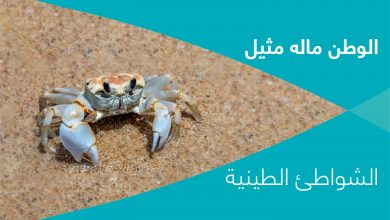 Photo of الوطن ماله مثيل- الشواطئ الطينية